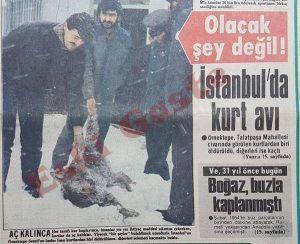 İstanbul'da kurt avı - Eski Gazeteler