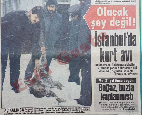 İstanbul'da kurt avı