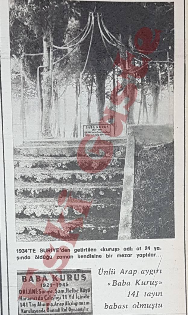 Karacabey Harası'nda bir at mezarı: Baba Kuruş