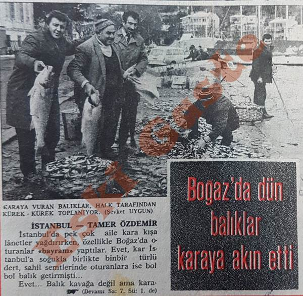 İstanbul Boğazı'nda Kürekle Balık Topladılar