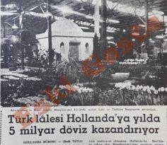 Türk Lalesi Hollanda'ya 5 Milyar Dolar Döviz Kazandırıyor